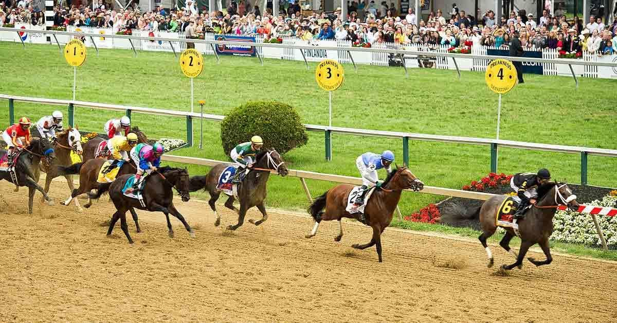 2019 Preakness Stakes Picks With Odds & Analysis
